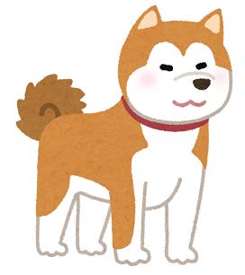 dog_akitainu2.png
