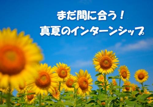 夏のインターンシップ.jpg